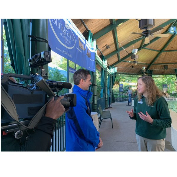 KMOV's Cory Stark speaks with Shawn Makepeace at the St. Louis Zoo.